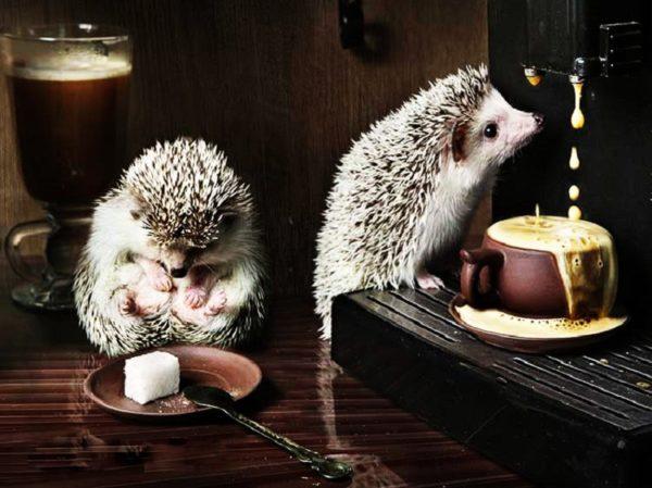 пара ежиков и кофе