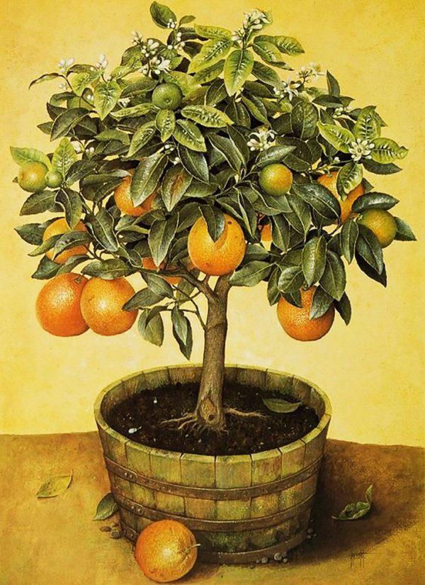 """Набор алмазной вышивки """"Апельсиновое дерево"""""""
