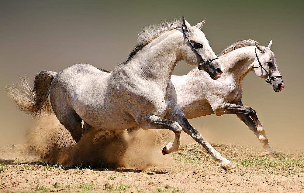 """Набор алмазной вышивки """"Пара бегущих лошадей"""""""