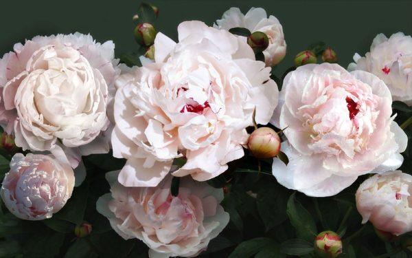 """Набор алмазной вышивки """"Бело-розовые пионы"""""""