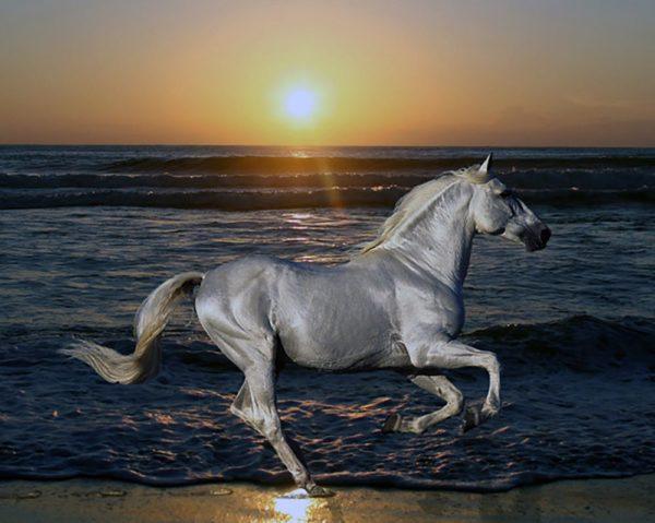 """Набор алмазной вышивки """"Белая лошадка"""""""