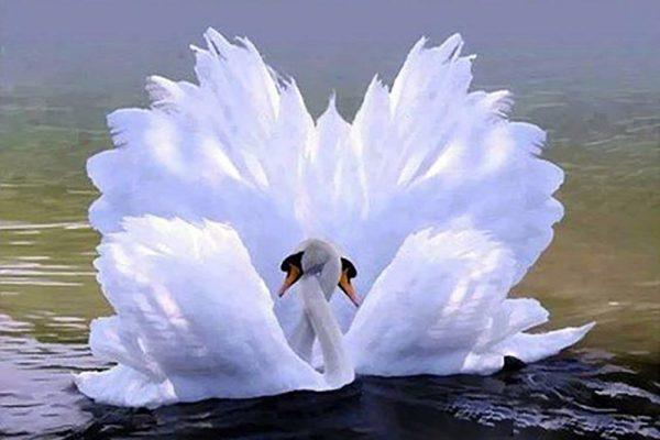 """Набор алмазной вышивки """"Лебеди - Танец любви"""""""