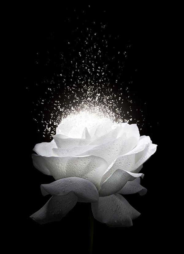 """Набор алмазной вышивки """"Королева цветов"""""""